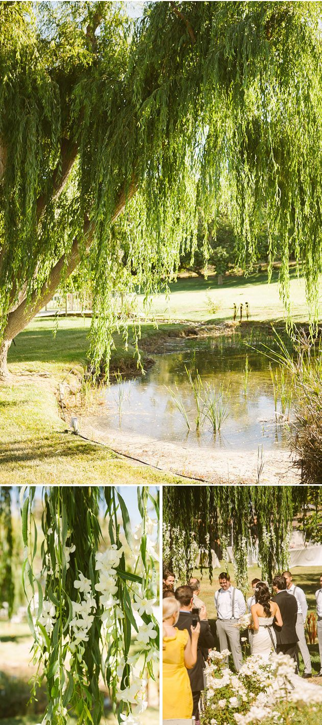 19 best Saule pleureur images on Pinterest | Weeping willow, Nature ...