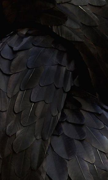 black.quenalbertini: Feather Art by Kate McGwire | Pondly  es.pinterest.com/pin/26106872815781576/