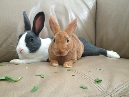 .Bunnies Lovr, Bunnies Bunnies, Bunnies Gilbert, Amor Animal, Things Bunnies, Bunnies Time, Bunnies Things, Gray Bunnies