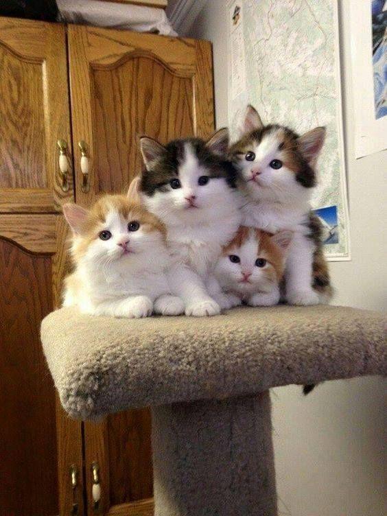 Pile of cuteness! =^..^= www.kittyprettygifts.com #cats #cute #lolcats #memes #kitty #kitten