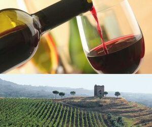 dove gustare il vino del lazio