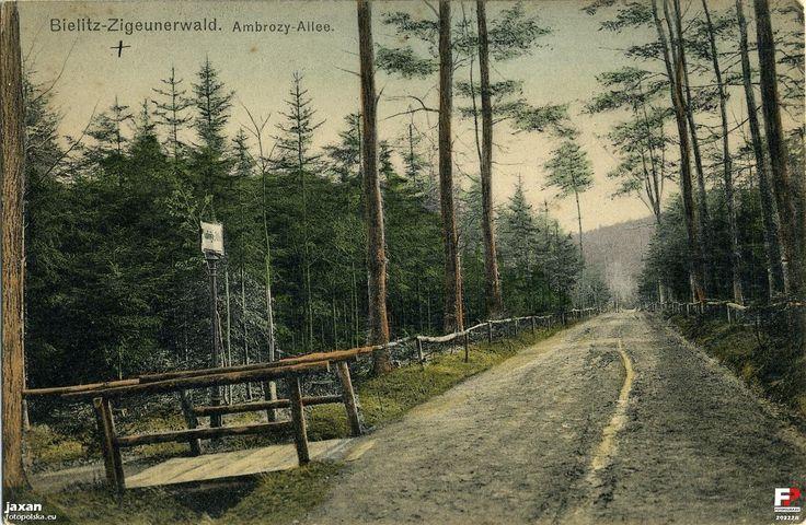 Cygański Las (Zigeunerwald, Las Miejski, Park Ludowy), Bielsko-Biała - 1911 rok, stare zdjęcia