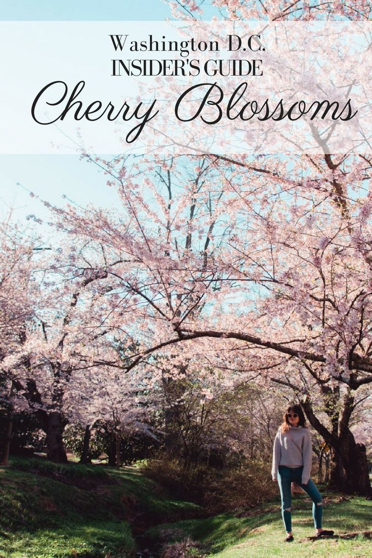 Kenwood Cherry Blossoms Experience Peak Bloom Without The Crowds Travel Usa Usa Travel Destinations Usa Travel Guide