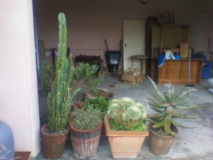 My 10 year old (plus/minus) cacti collection in their new home in University Estate, Cape Town 19.09.2013