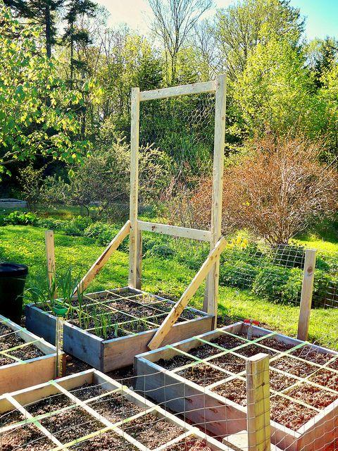 Pea Trellis - Square Foot Garden by Campobello Island, via Flickr