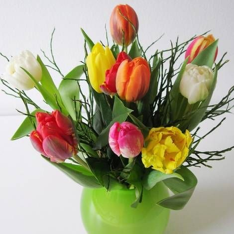 Tulpen-Pflege