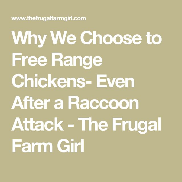 Why We Choose to Free Range Chickens- Even After a Raccoon Attack - The Frugal Farm Girl