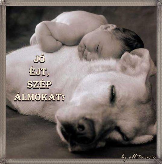 Jó éjt, szép álmokat! -- FELIRATOS KÉPESLAPOK,Vicces képek ...