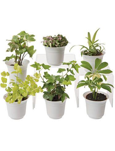 Low Light Terrarium Plant Collection, Set of 6
