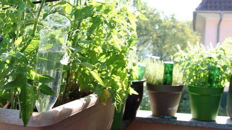 Pflanzen bewässern mit PET-Flaschen