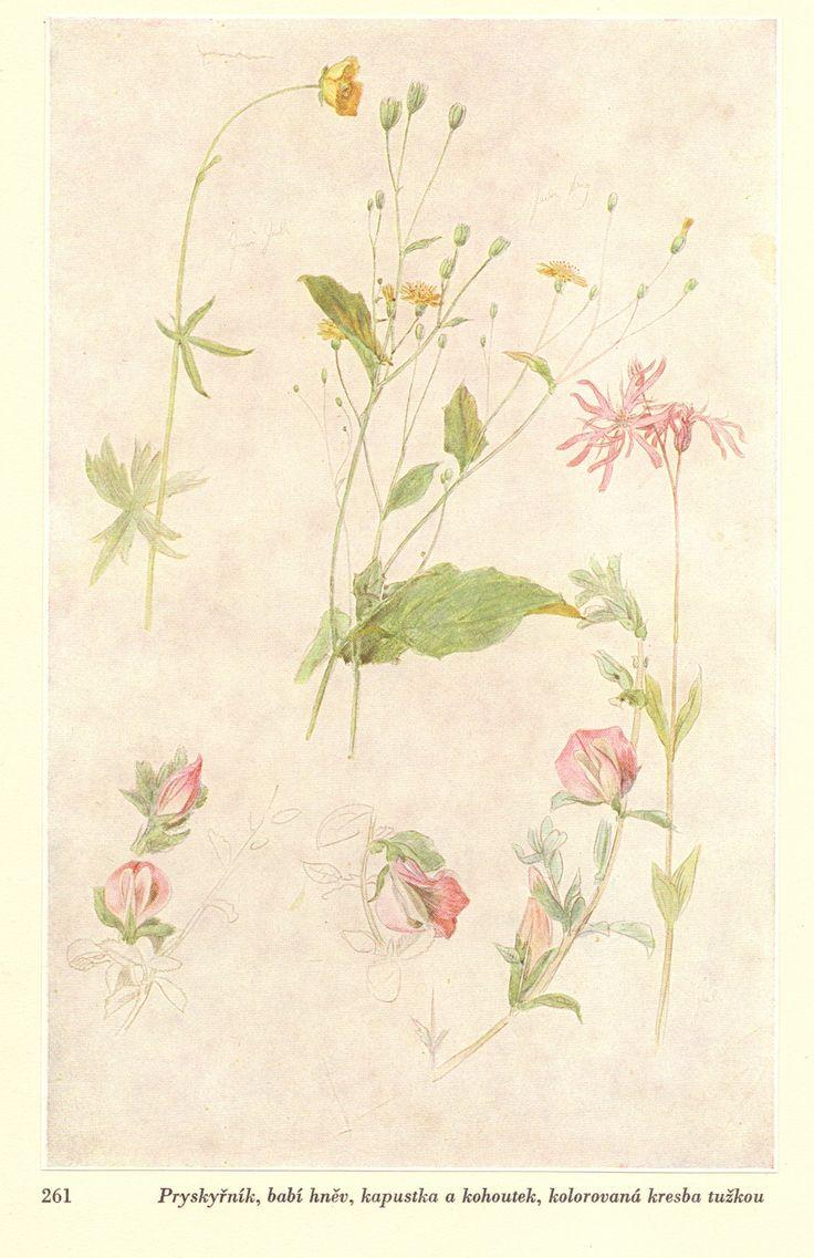 Studie květin,Josef Mánes