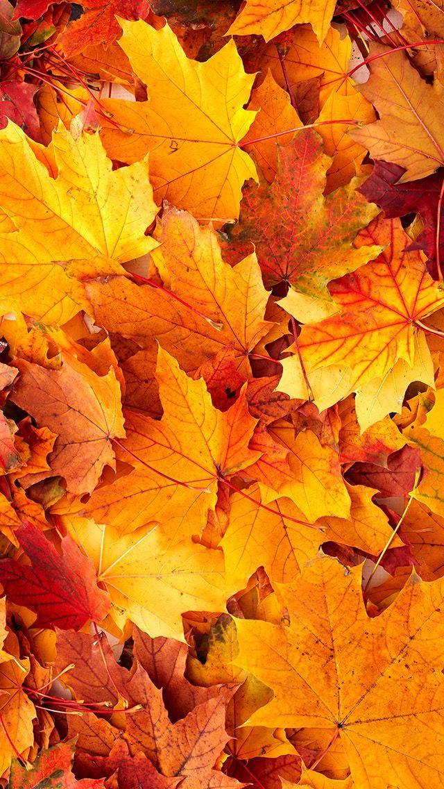 Best ideas about autumn iphone wallpaper on pinterest