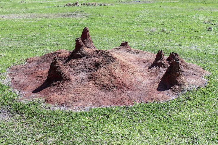 http://previews.123rf.com/images/schubphoto/schubphoto1308/schubphoto130800035/21618067-A-large-ant-hill-mound-made-of-dirt-and-clay-located-in-Africa--Stock-Photo.jpg