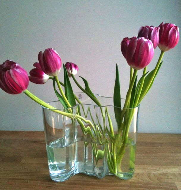 The curvy modern form of the Alvar Aalto vase with some pink tulips.