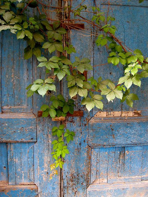 Country Living ~ old doors, vines