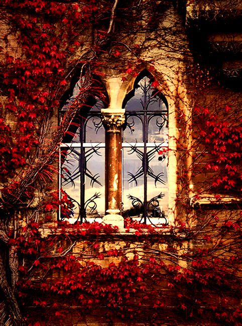Autumn ivy covered window in Oxford, England