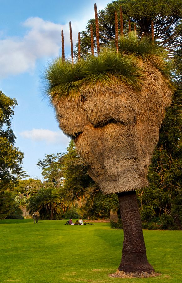 Old Grass tree in Royal Botanic Gardens Melbourne Australia - Explore the World with Travel Nerd Nici, one Country at a Time. http://TravelNerdNici.com