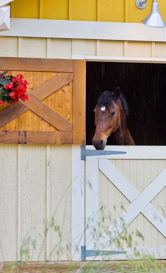 25 best ideas about barn plans on pinterest horse barns for Horse stall door plans