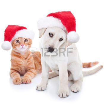 rote katze: Cute Christmas Labrador Haustier Hund und Katze auf weißem Lizenzfreie Bilder
