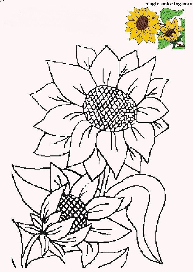 MAGIC-COLORING | Sunflower Coloring pages