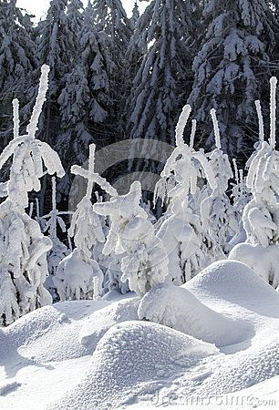 Winter landscape in a mountain forest.
