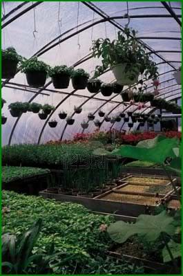 17 best ideas about build a greenhouse on pinterest diy for Do it yourself greenhouse plans