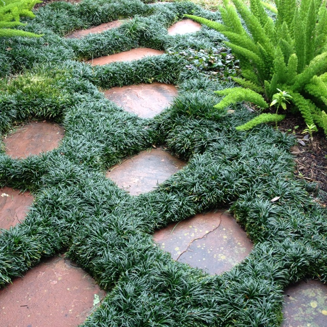 Monkey grass between paving stones. Really like this idea, no place for weeds!! Woot woot!