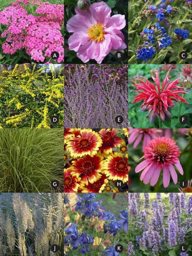 Garden Design And Plants