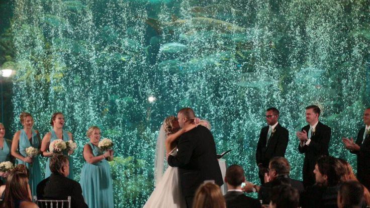 142 best Florida Aquarium Weddings images on Pinterest ...