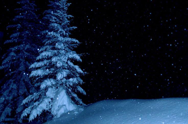 Silence in the Snowy Fields : Poems.
