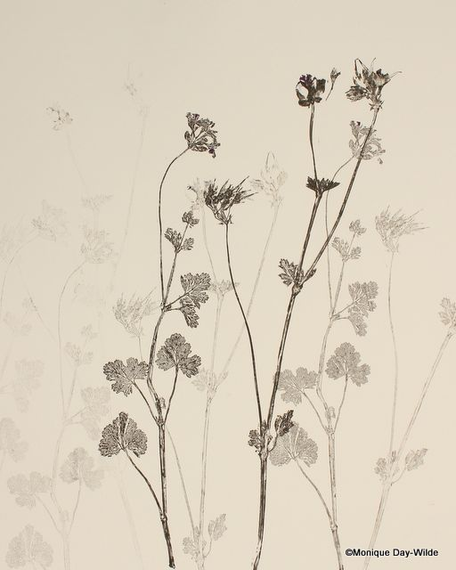 Botanical Monotypes by Monique Day-Wilde