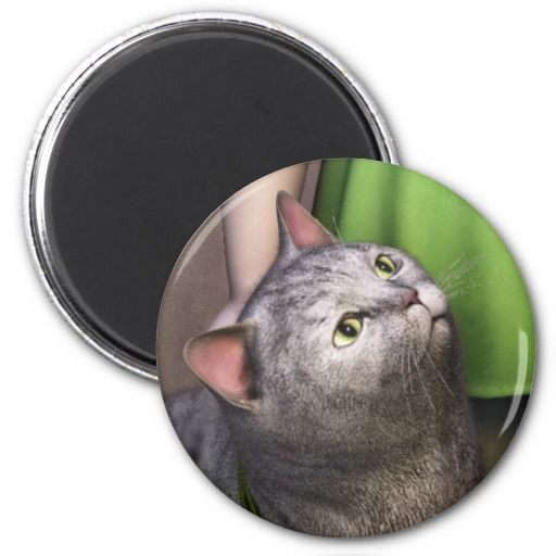 some of my cats proposed as magnet. This is Gray Cat 3 Refrigerator Magnet