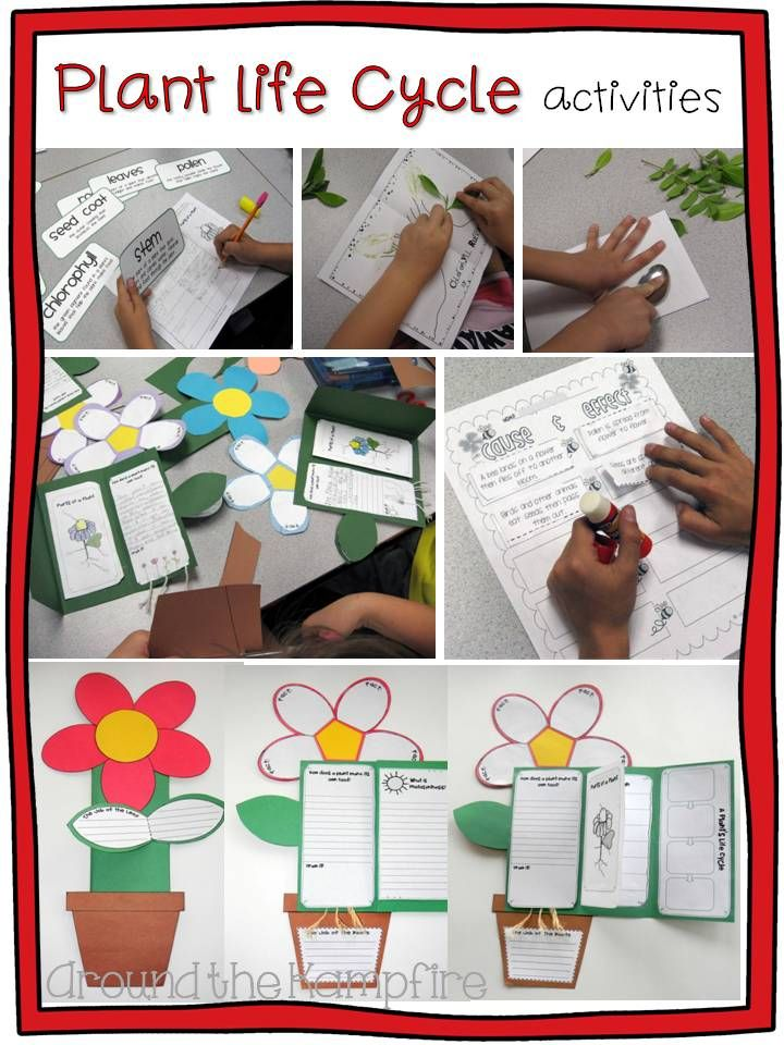 Plant life cycle activities:  Get your students thinking and writing about science!  Around the Kampfire