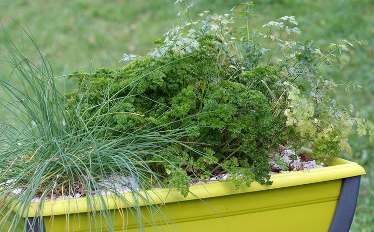 les bonnes herbes conseils jardinage pinterest