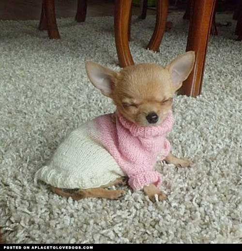 Cute, sweet & very sleepy!