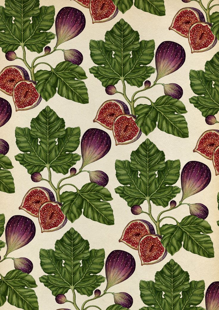 Wallpapers and Patterns : Photo