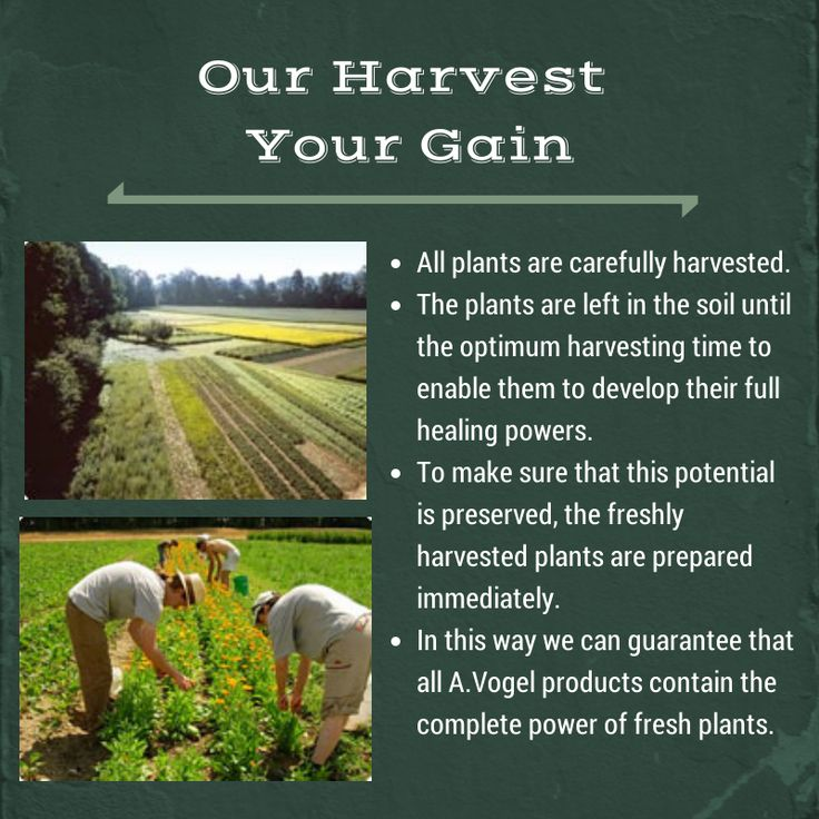 Whether from our own fields, from those of our contract farmers or from our specially trained wild gatherers:  the plants are harvested at an ideal, carefully predetermined time and immediately made into tincture so that we can provide the maximum content of active substances.