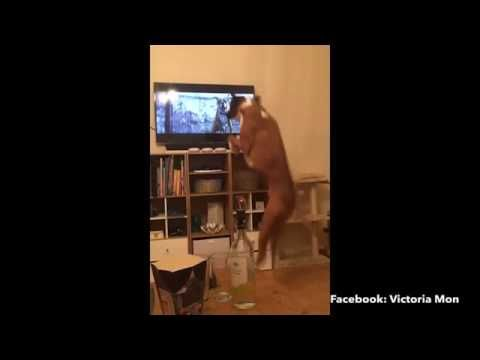 One way to make your day happier! #dogs #boxerdog #adorable #petlover #whywelovedogs https://www.youtube.com/watch?v=5oW1Qrq1Ytk