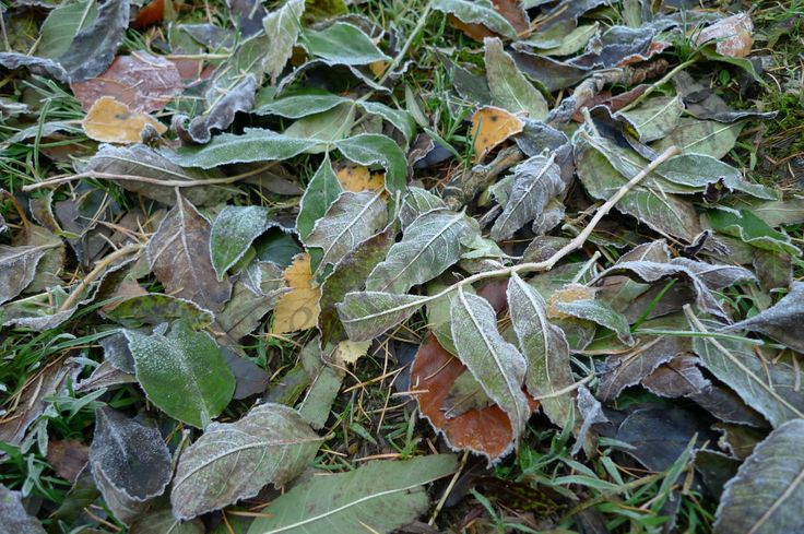 FROSTY LEAVES, rimed leave collection, instant digital download photograph, colour, texture, pattern, beautiful fall/autumn mass/mess, by ISeeTexturesPattern on Etsy