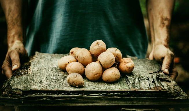 Malé brambory: kdysi se zaorávaly, dnes jsou hitem - Vitalia.cz