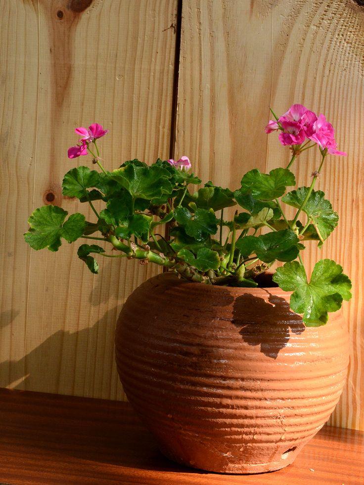mudfingers.com - Geranium (Dark Pink)