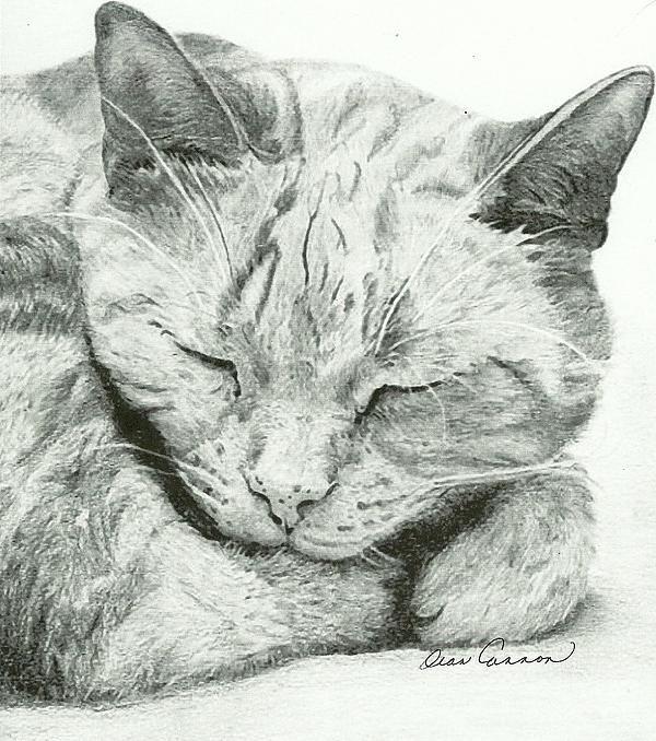 My cat Orange Julius (that I sadly had to put down)...pencil drawing