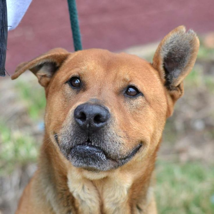 Tyler - very HAPPY DOG! needs a home! | ADOPT!!!!/LOST ...