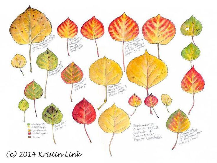 Quakie Tree Tattoo Great Leaf Tangle Great Blog Galaxy Wedding