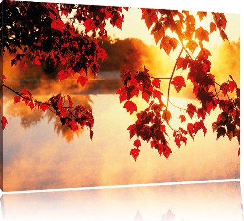Roter Ahorn im Sonnenlicht Bild auf Leinwand, XXL riesige Bilder fertig gerahmt mit Keilrahmen, Kunstdruck auf Wandbild mit Rahmen, guenstiger als Gemaelde oder Bild, kein Poster oder Plakat, Format:100x70 cm Jetzt bestellen unter: http://www.woonio.de/p/roter-ahorn-im-sonnenlicht-bild-auf-leinwand-xxl-riesige-bilder-fertig-gerahmt-mit-keilrahmen-kunstdruck-auf-wandbild-mit-rahmen-guenstiger-als-gemaelde-oder-bild-kein-poster-oder-plakat-format1/