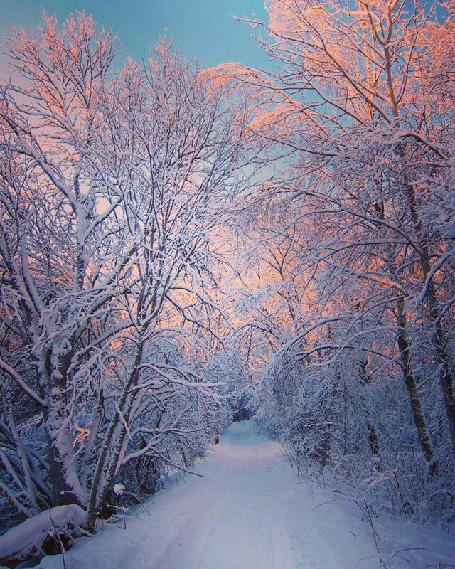 #snow #winter #forest #nature