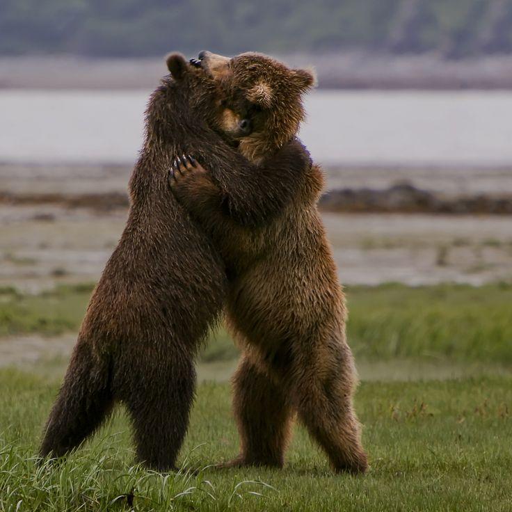 обнимающиеся медвежата картинки нему невозможно сказать