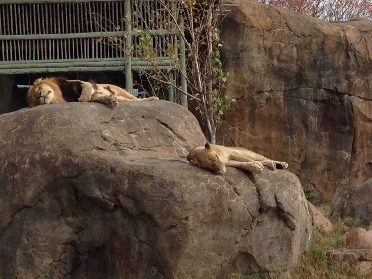 nunavut zoo