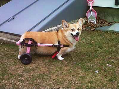 Adjustable Dog Wheelchair How much does a dog wheelchair cost?