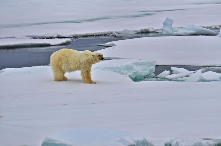 The King of Arctic by Hermes S on 500px